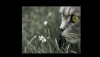 Diaporamas PPS - Des animaux qui ont du panache
