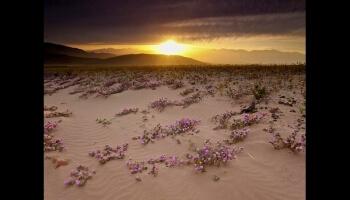 Scènes au coeur du désert