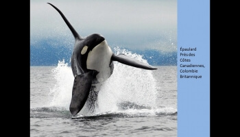 Concours de photos de National Geographic 2010