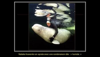 Diaporamas PPS - La sirène et les belugas