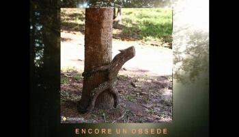 Diaporamas PPS - Des arbres surprenants et insolites