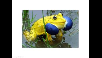 25 animaux aux couleurs improbables