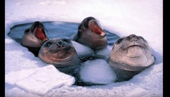 La beauté de l'Antarctique