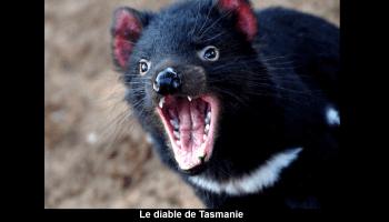 La Tasmanie - l'île du Diable
