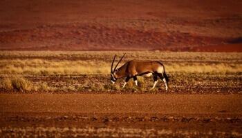 La fascination du désert