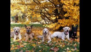 Diaporamas PPS - L'arrivée des couleurs à l'automne