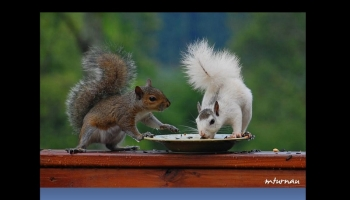 PPS Slideshows - Pictures of squirrels