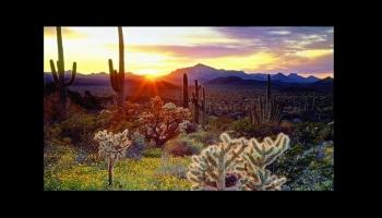 Le désert d'Arizona