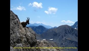 Découverte du parc national des écrins dans le Mercantour et l'Oisans