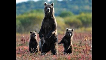 Voyage au Kamtchatka, au Pays des Ours