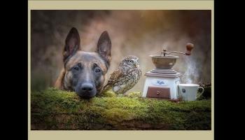 Le chien et le hibou