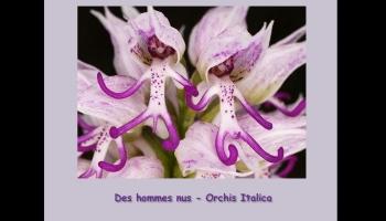 Fleurs exceptionelles