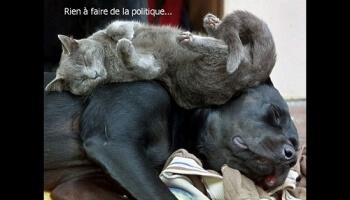 Diaporamas PPS - Je veux être chat