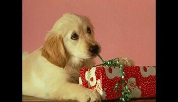Diaporamas PPS - Noël des animaux