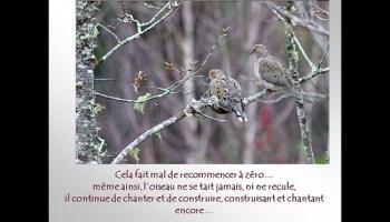 Leçon de persévérance avec les oiseaux