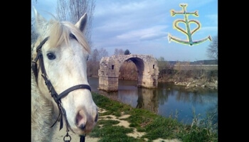 What the Camargue is beautiful!